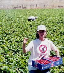 U-Pick-farming